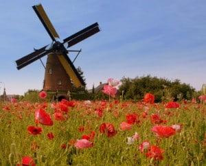 เรียนต่อเนเธอร์แลนด์