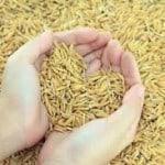 riz-non-decortique
