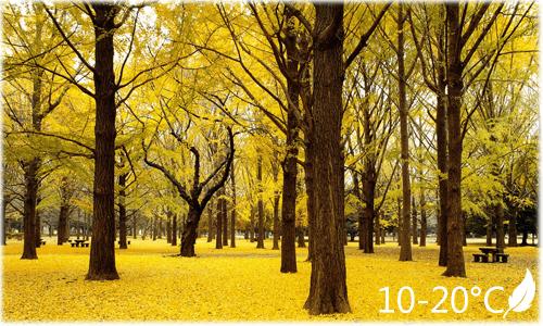 autumn_master