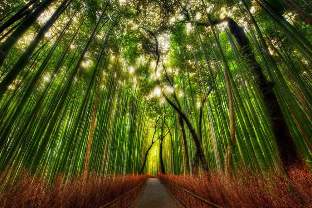เรียนภาษาญี่ปุ่นที่โอซาก้า อาราชิยาม่า (Arashiyama) – เที่ยวเมืองเกียวโต