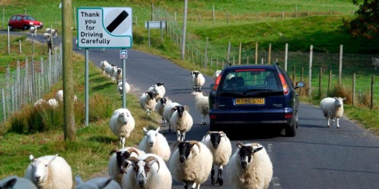การขับรถในสกอตแลนด์