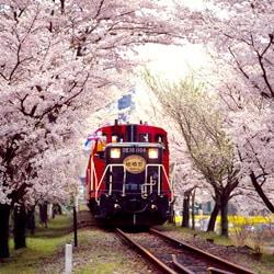 เรียนภาษาญี่ปุ่นที่โอซาก้า รถไฟสายโรแมนติค SAGANO TOROKKO – เที่ยวเมืองเกียวโต