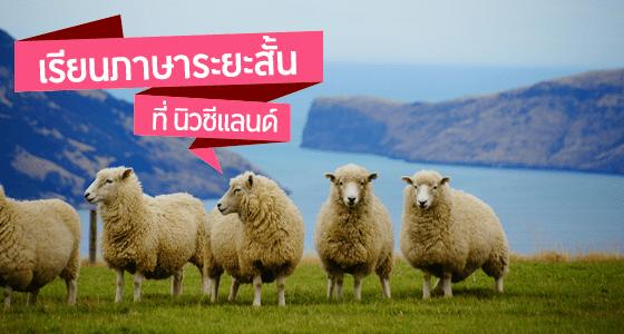 เรียนภาษาระยะสั้น ที่ประเทศนิวซีแลนด์