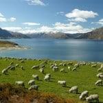ทุนการศึกษาประเทศนิวซีแลนด์ New Zealand ASEAN Scholarship