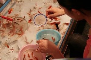 ปลาคาร์ฟญี่ปุ่น