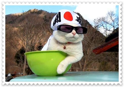 แมวญี่ปุ่น