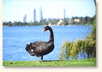 lake-monger