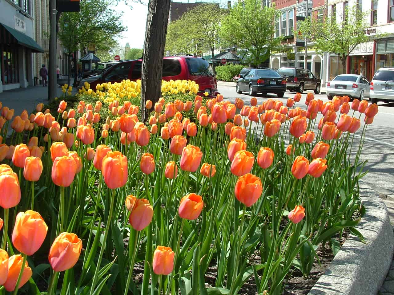 Holland_MI_Tulips_02