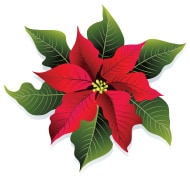 stock-illustration-7549607-christmas-red-and-green-poinsettia-flower-vector-illustration