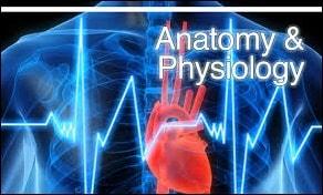 อันดับมหาวิทยาลัยในอังกฤษ สาขา Anatomy & Physiology