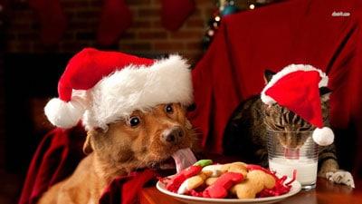 คริสต์มาสกับเจ้านาย
