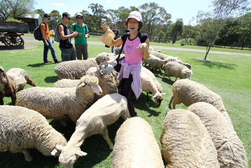 กิจกรรม 1 เรียนซัมเมอร์ ที่ออสเตรเลีย สำหรับเด็ก