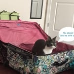 จัดกระเป๋าเดินทาง ไปต่างประเทศ checklist กระเป๋าเดินทาง Travel Checklist