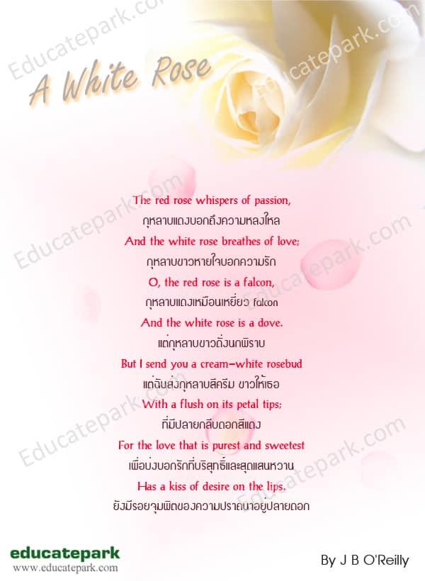 กลอน A White Rose