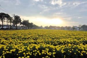 ทำไมคนไทยถึงนิยมใส่เสื้อเหลือง ดอกไม้ประจำ ร.9