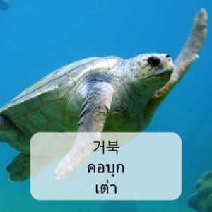คำศัพท์สัตว์ ภาษาเกาหลี