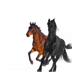 แปลเพลง Old Town Road (Remix) - Lil Nas X
