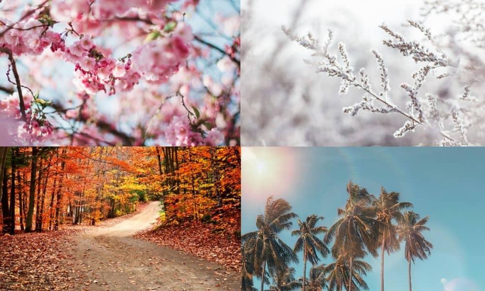 ฤดูในเกาหลี