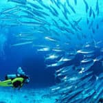 scuba-diving-gallery-2